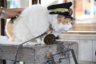 NITAMA CAT MASTER K1